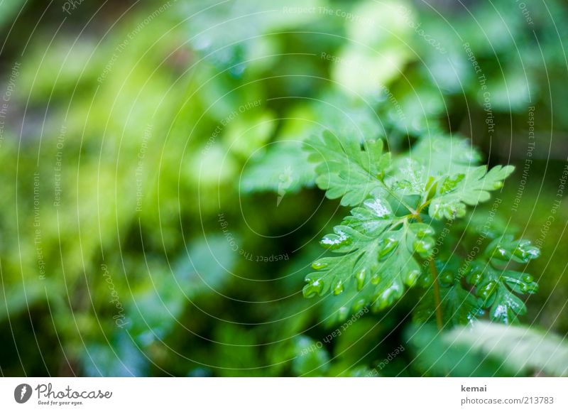Nature Water Green Plant Summer Leaf Environment Meadow Rain Wet Growth Drops of water Bushes Herbs and spices Damp