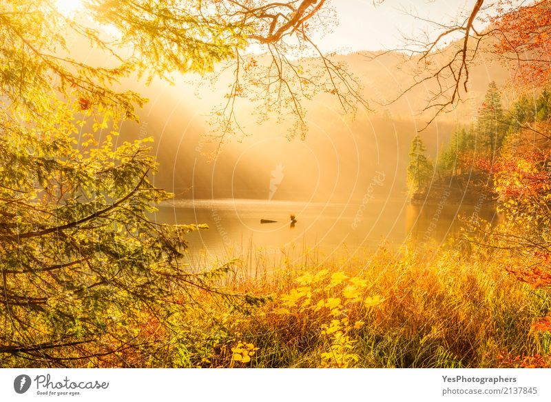 Sun rays and autumn nature Mountain Nature Landscape Sunlight Autumn Fog Warmth Tree Leaf Forest Lake Think Dream Happy Bright Natural Multicoloured Yellow Gold