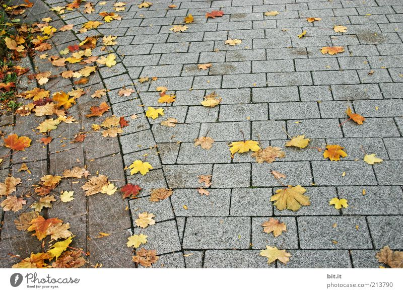 Grey-Yellow Squared Nature Autumn Wind Leaf Autumn leaves Autumnal Maple leaf To fall Lie Stone slab Stone floor Gray Moody Gloomy Line Sharp-edged Ground