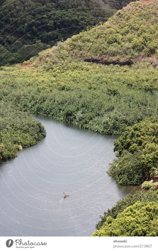 Nature Tree Loneliness Forest Landscape Power Target River Hill Brave Virgin forest Sportsperson Performance Determination Kayak Canoe