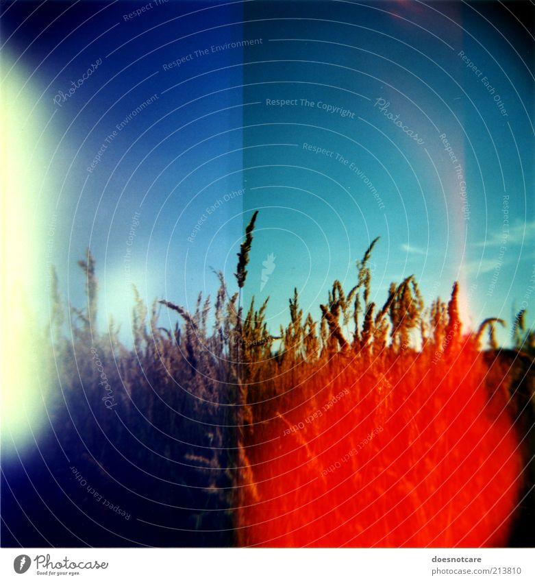 Sky Plant Red Field Fire Grain Analog Double exposure Lomography Medium format Vignetting Light Grain field Patch of light Light leak