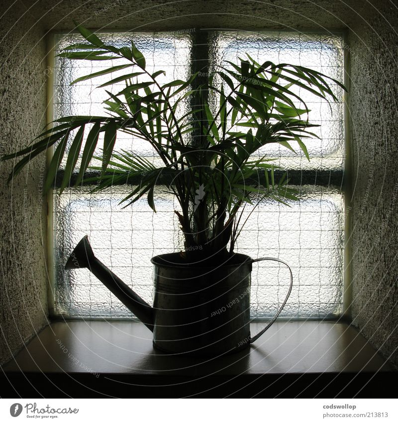 Plant Dark Window Environment Gloomy Survive Foliage plant Watering can Window board Window transom and mullion Glass block Window decoration Green thumb Growth-enhancing