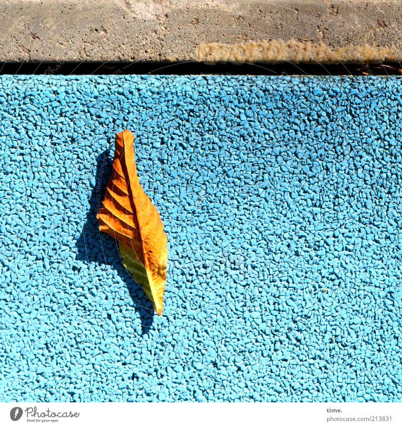 summer closing heat Stone Concrete Exceptional Leaf Autumn Gold Structures and shapes Old Modern Blue Gray Colour Dye Sidewalk Floor covering Pavement Parallel
