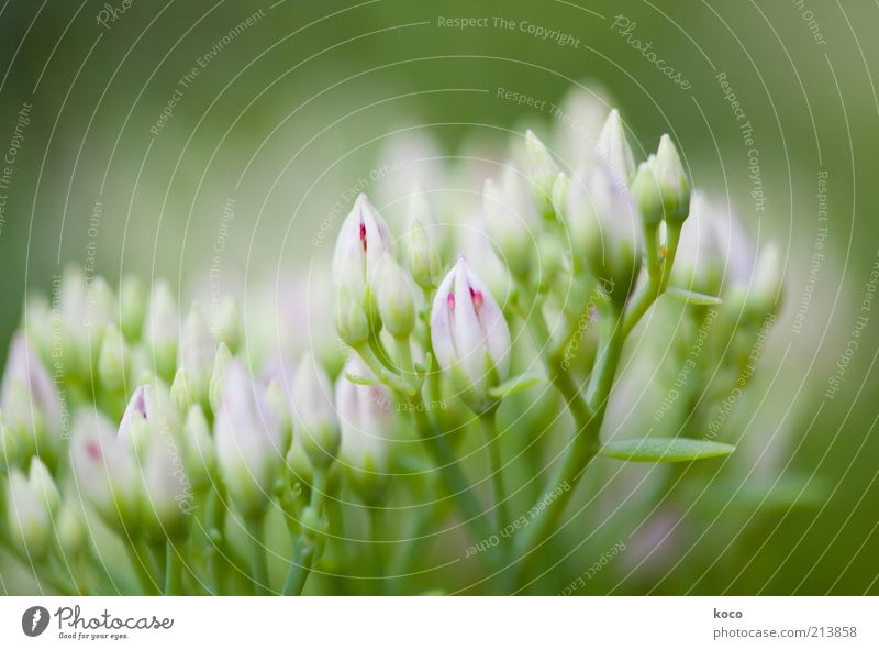 pinkish-green Beautiful Nature Plant Spring Summer Flower Blossom Foliage plant Blossoming Growth Fragrance Natural Green Pink White Spring fever Colour photo