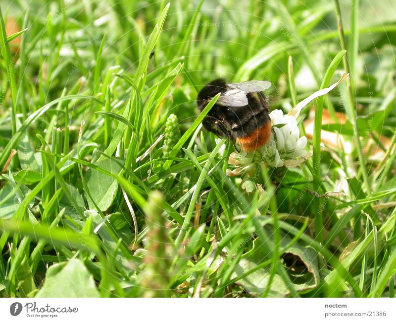 Meadow Insect Bee Bumble bee Wasps