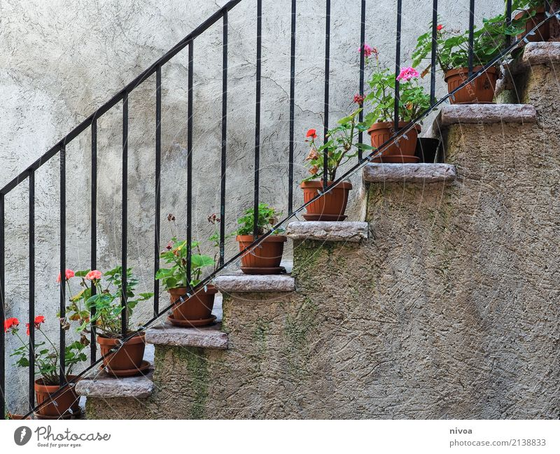 Nature Vacation & Travel Old Plant Beautiful Flower House (Residential Structure) Environment Wall (building) Emotions Wall (barrier) Stone Facade