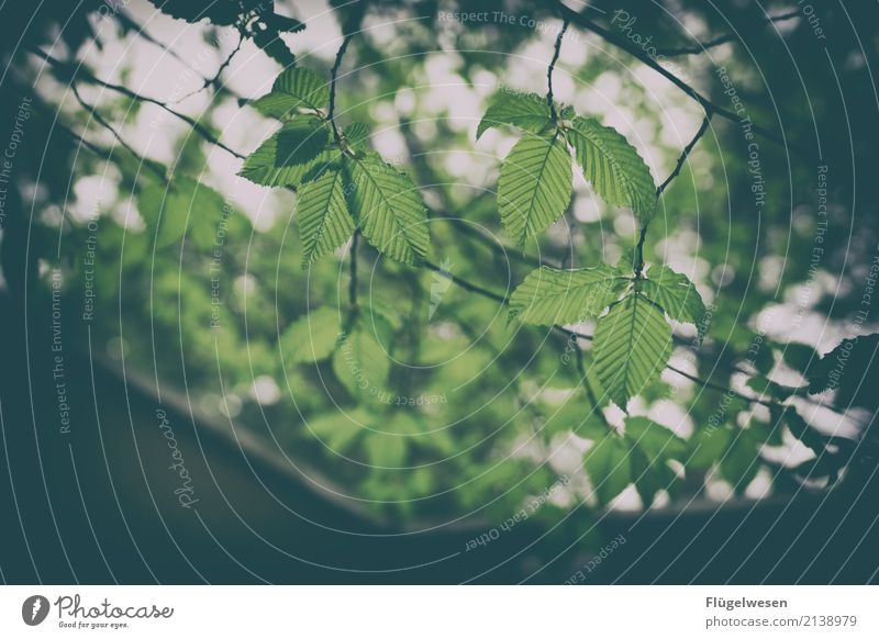 leaf canopy Lifestyle Leisure and hobbies Vacation & Travel Tourism Trip Adventure Far-off places Freedom Summer Summer vacation Environment Nature Landscape