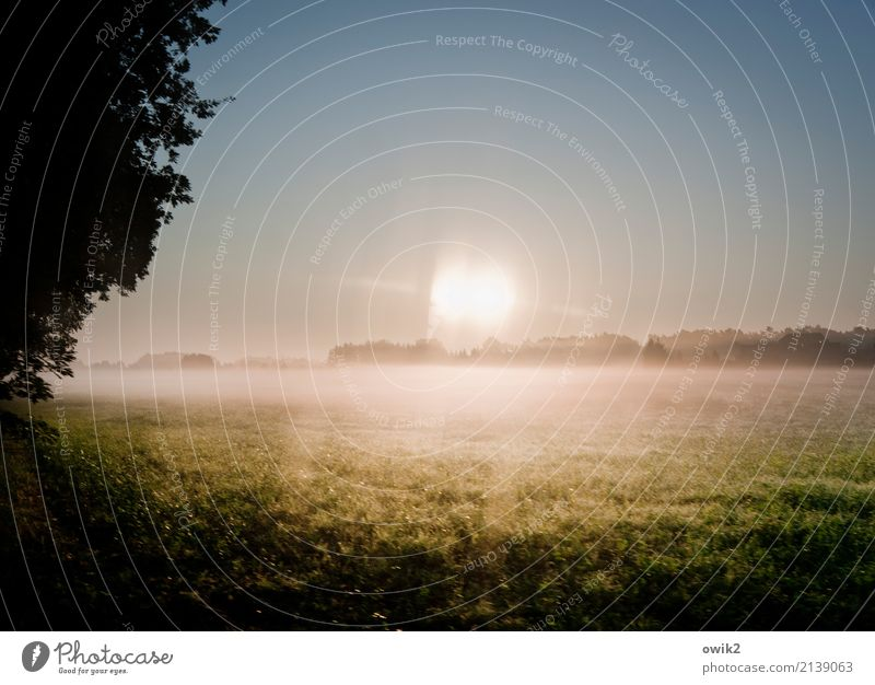 food for thought Environment Nature Landscape Cloudless sky Horizon Spring Beautiful weather Tree Grass Car Window Glass Illuminate Bright Reduplication
