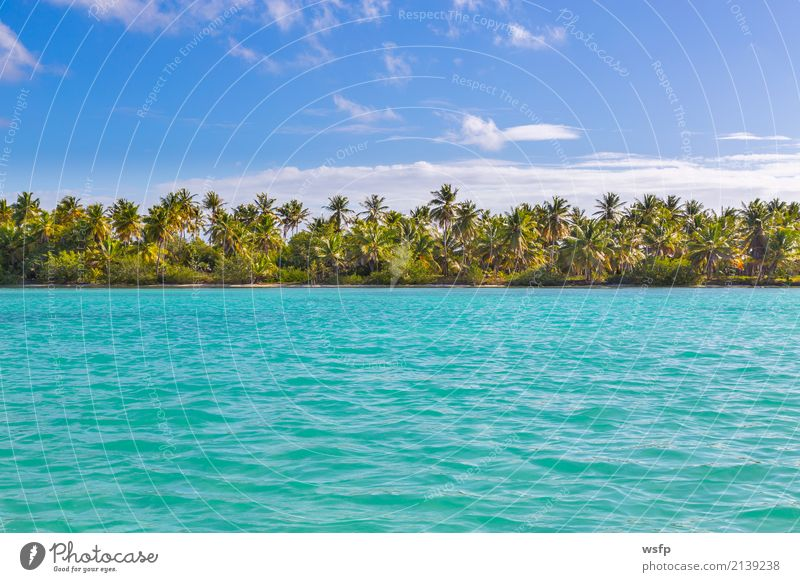 Palms on the beach of Isla Saona Exotic Relaxation Vacation & Travel Tourism Summer Sun Beach Ocean Island Water Blue Turquoise White Idyll Palm tree saona