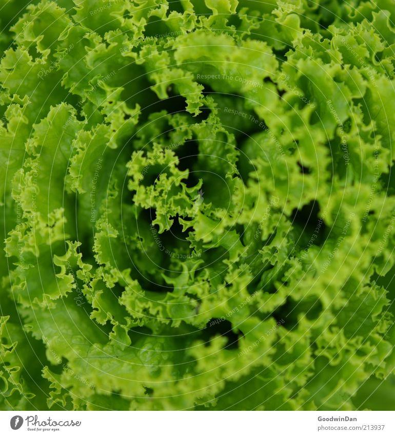 Green Nutrition Healthy Food Fresh Near Simple Vegetable Organic produce Lettuce Salad leaf