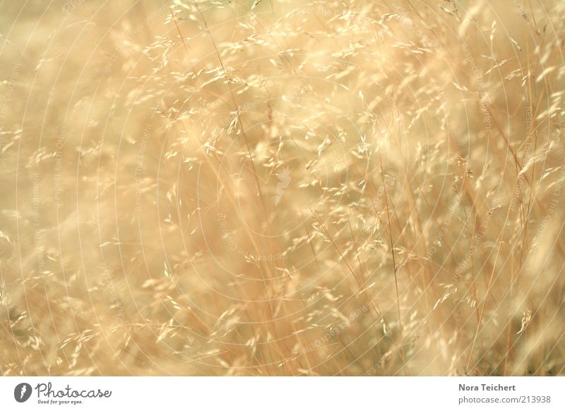Nature Beautiful Plant Summer Grass Movement Bright Glittering Environment Gold Esthetic Growth Multiple Abstract Uniqueness Wild