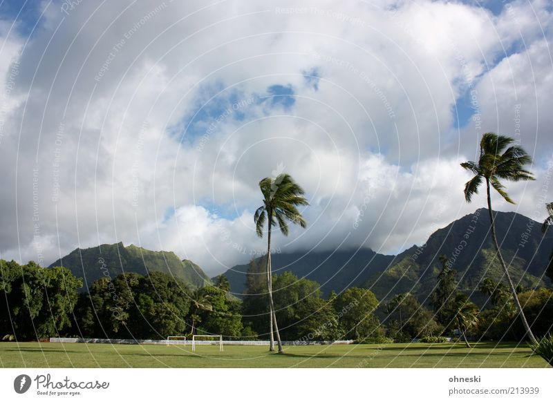 Clouds Landscape Mountain Hill Grass surface Virgin forest Palm tree Exotic Football pitch Clouds in the sky Hawaii Sporting Complex Kauai