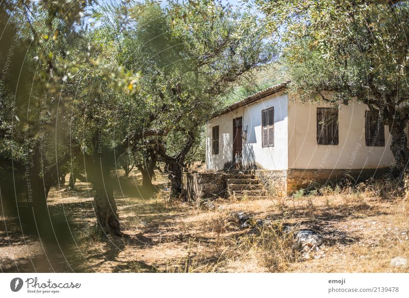 in the olive grove Environment Nature Beautiful weather Warmth Tree Hut Natural Olive grove Olive tree Zakynthos Colour photo Exterior shot Deserted Day