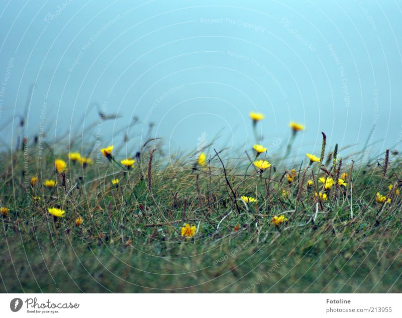 Nature Sky Flower Green Blue Plant Summer Yellow Meadow Blossom Grass Landscape Bright Coast Environment Earth