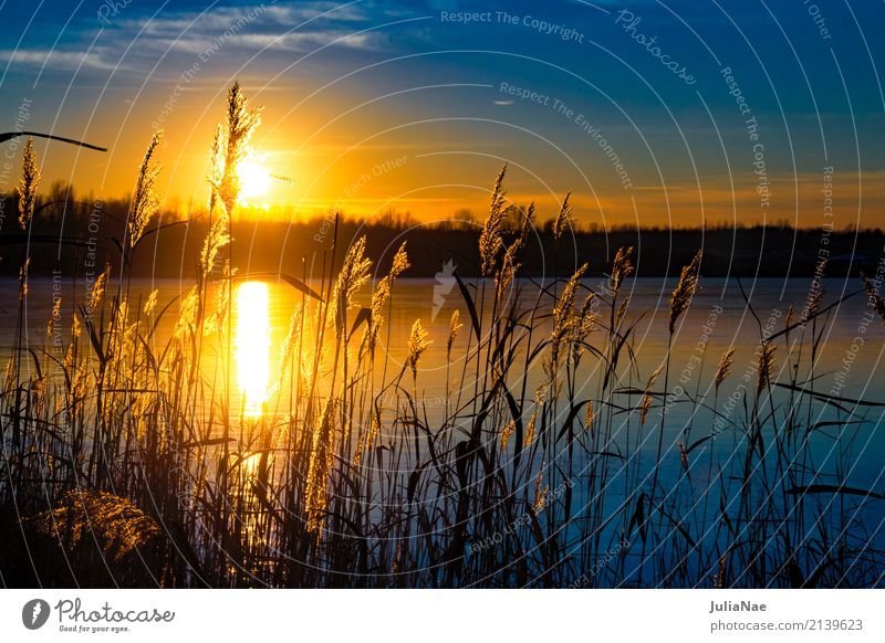 Sunset behind grasses Relaxation Calm Vacation & Travel Water Grass Lake Blue Orange Dusk Colour photo Exterior shot Detail Deserted Copy Space right