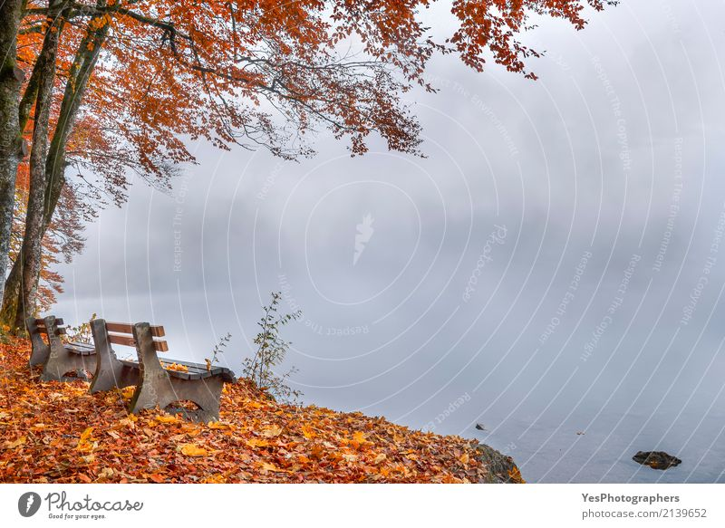 Misty lake shore and autumn woods Happy Relaxation Leisure and hobbies Vacation & Travel Tourism Trip Hiking Nature Landscape Autumn Bad weather Fog Tree Leaf