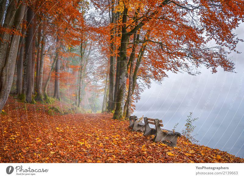 Misty lake shore and autumn woods Design Joy Relaxation Calm Leisure and hobbies Vacation & Travel Tourism Freedom Hiking Nature Landscape Autumn Fog Tree Leaf