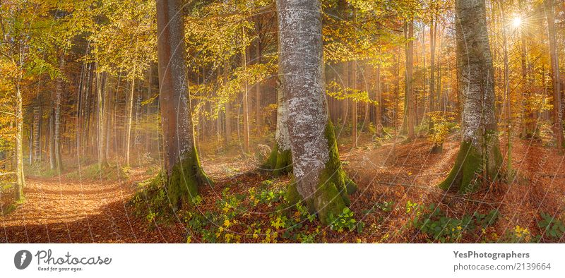 Sunshine through autumn forest Design Joy Happy Relaxation Leisure and hobbies Vacation & Travel Hiking Nature Landscape Sunlight Autumn Warmth Tree Leaf Forest