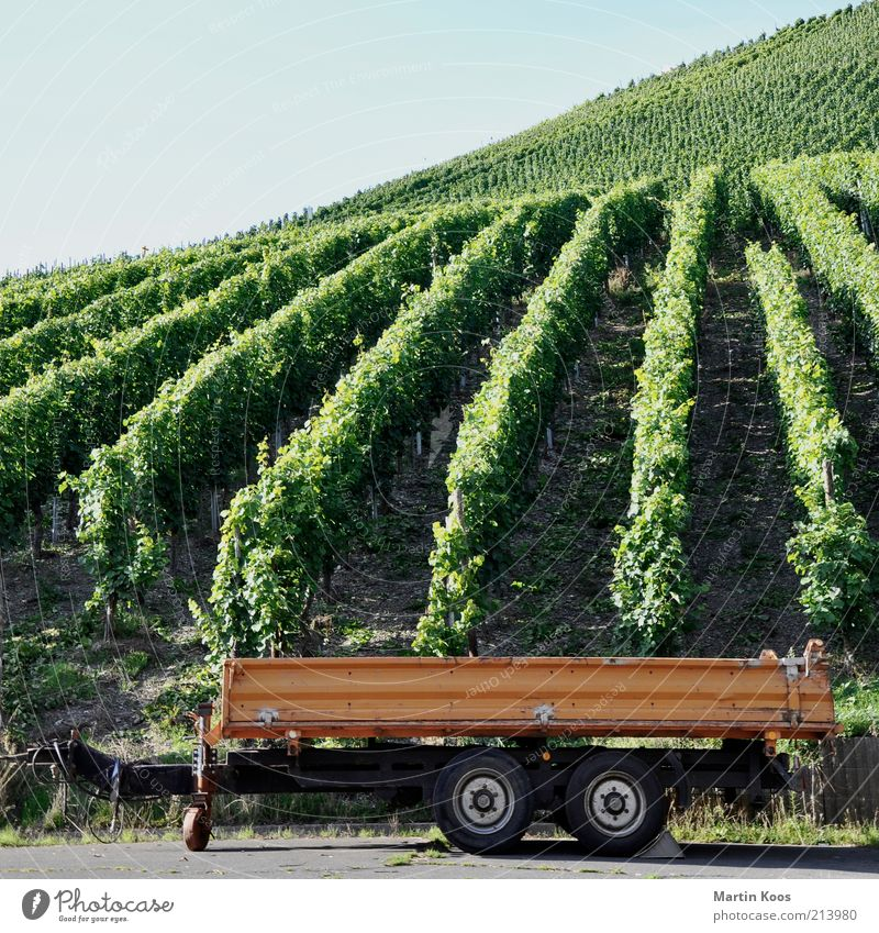 Life Style Mountain Line Vine Natural Hill Wheel Row Harvest Slope Carriage Vineyard Grape harvest Trailer Agriculture