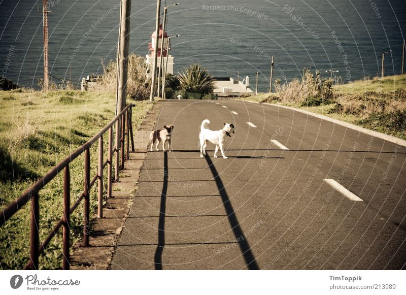 The strays of Madeira Animal Pet Dog 2 Stand Ocean Mediterranean sea Road traffic Sunlight Traffic infrastructure Loneliness Exposed Fence Summer Shadow