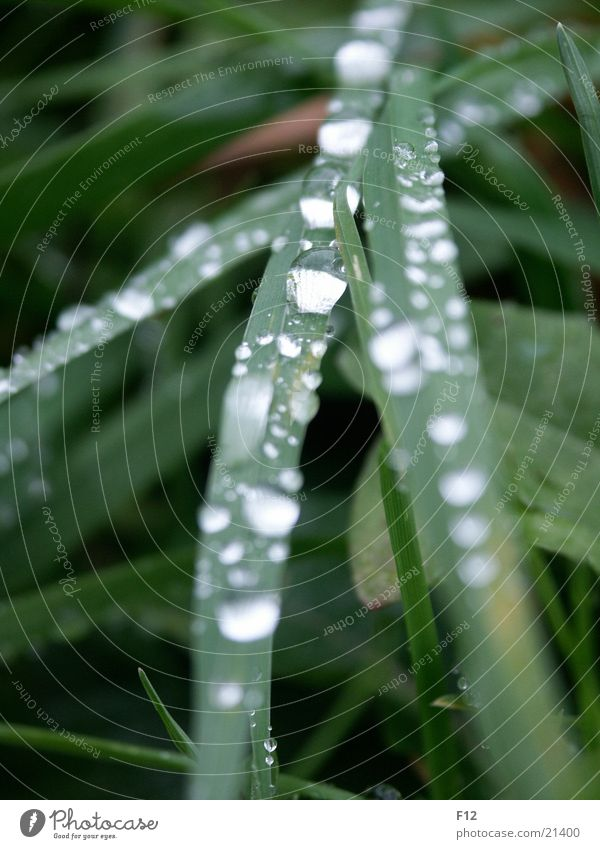 Meadow after the rain Grass Green Light Damp Blur Rope Water Drops of water Reflection Rain