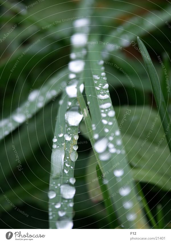 Water Green Meadow Grass Rain Drops of water Rope Damp