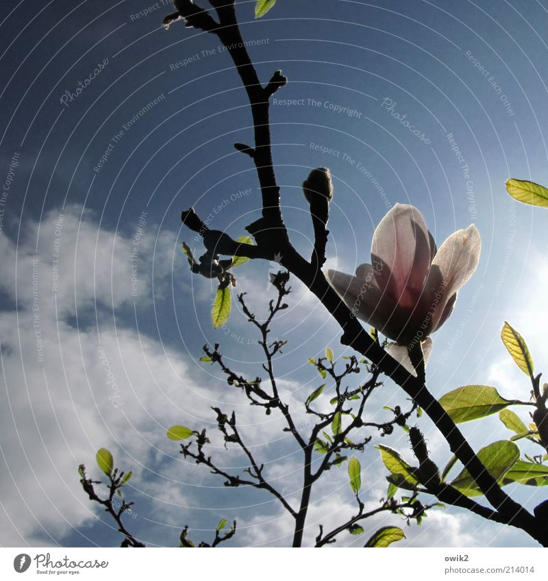 Sky Nature Plant Beautiful Leaf Clouds Environment Spring Blossom Wood Air Illuminate Growth Esthetic Climate Blossoming