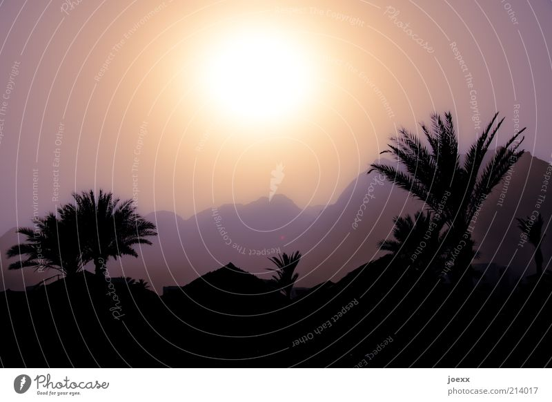 Arabian Nights Nature Landscape Sky Sun Sunlight Beautiful weather Warmth Tree Mountain Roof Hot Brown Palm tree Egypt Colour photo Subdued colour Exterior shot