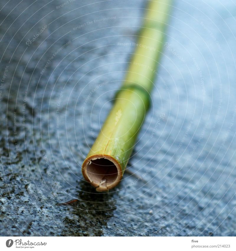 O Environment Nature Bad weather Rain Plant Exotic Bamboo Bamboo stick Wet Ground Paving tiles Hollow Round Colour photo Exterior shot Close-up Detail