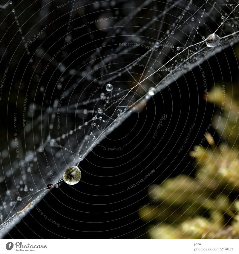 beginning of autumn Nature Rain Line String Net Network Drop Esthetic Elegant Calm Accuracy Environment Attachment Damp Wet Dew Drops of water Spun Dawn