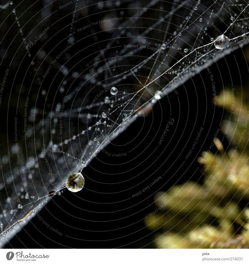 Nature Loneliness Calm Environment Line Rain Elegant Copy Space Esthetic Drops of water Wet String Network Attachment Delicate