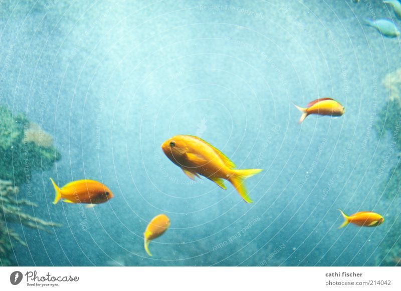 complementary colors Water Animal Fish Zoo Aquarium Group of animals Animal family Blue Yellow Green Air bubble Fin Eyes Motion blur Complementary colour Ocean