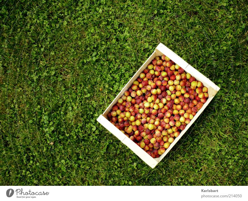 Nature Summer Joy Environment Autumn Meadow Movement Healthy Happy Garden Lifestyle Food Work and employment Fruit Nutrition Organic produce