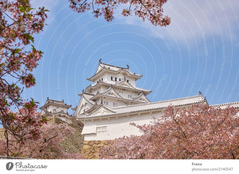 Architecture Building Garden Elegant Manmade structures Tourist Attraction Landmark Castle Japan Palace Cherry blossom Japanese garden