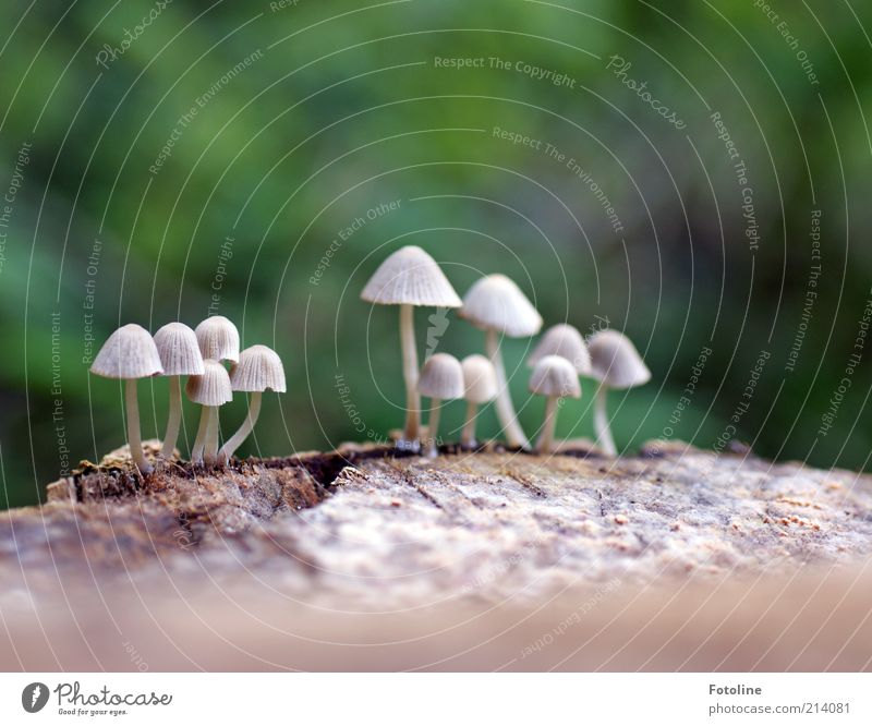 Nature White Green Plant Autumn Gray Bright Environment Earth Growth Natural Mushroom Elements Beige Mushroom cap Wild plant