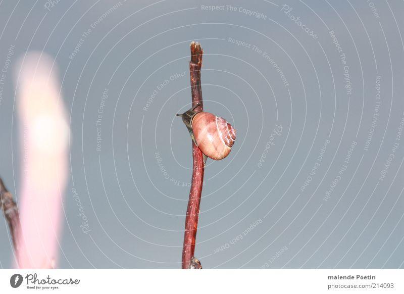 Calm Animal Autumn Emotions Moody Air Bushes Joie de vivre (Vitality) Curiosity Hope Safety Serene Brave Self-confident Effort Snail