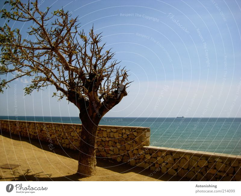 Sky Nature Blue Water Tree Plant Vacation & Travel Ocean Summer Yellow Environment Wall (building) Landscape Sand Stone Coast