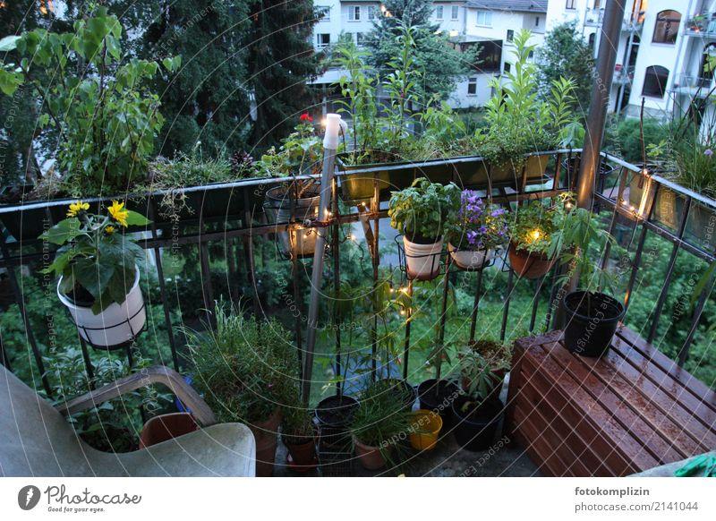 balcony life 2 Living or residing Balcony Balcony plant Balcony furnishings Spring Summer Bad weather Plant Flower Pot plant Backyard Flowerpot Blossoming