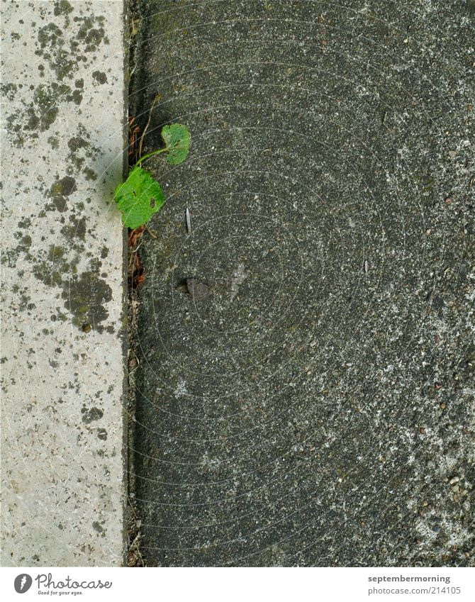Wall (building) Gray Wall (barrier) Power Concrete Hope Gloomy Asphalt Seam Foliage plant Plantlet