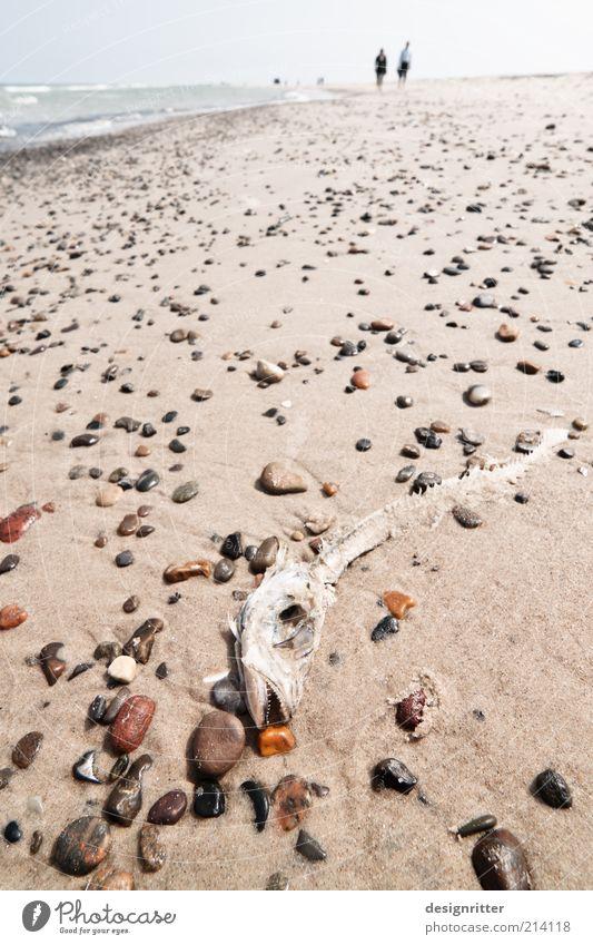 Ocean Beach Death Stone Sand Coast Hiking Fish To go for a walk Lie Wild animal Dry North Sea Animal Skeleton Environment