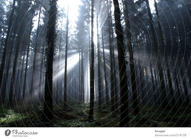 Nature White Sun Plant Black Forest Dark Autumn Grass Wood Landscape Fog Environment Growth Bushes