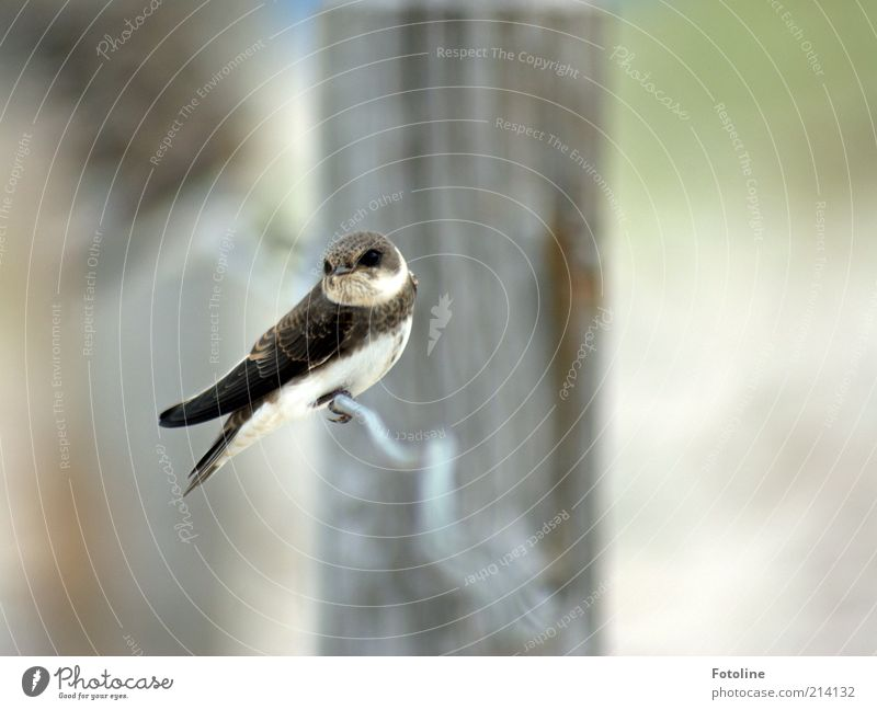 What are you looking at? Environment Nature Animal Elements Air Summer Coast Beach Wild animal Bird Wing Sit Natural Sand martin Swallow Feather Colour photo