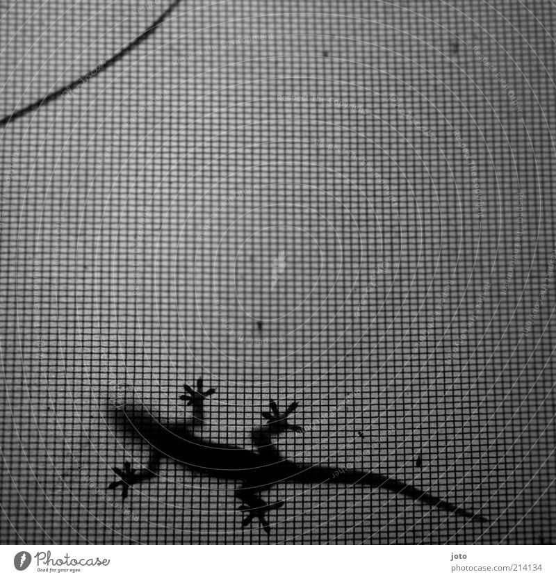 Calm Loneliness Animal Relaxation Elegant Design Speed Esthetic Network Discover Black & white photo Back-light Grating Lizards Creep Mesh grid