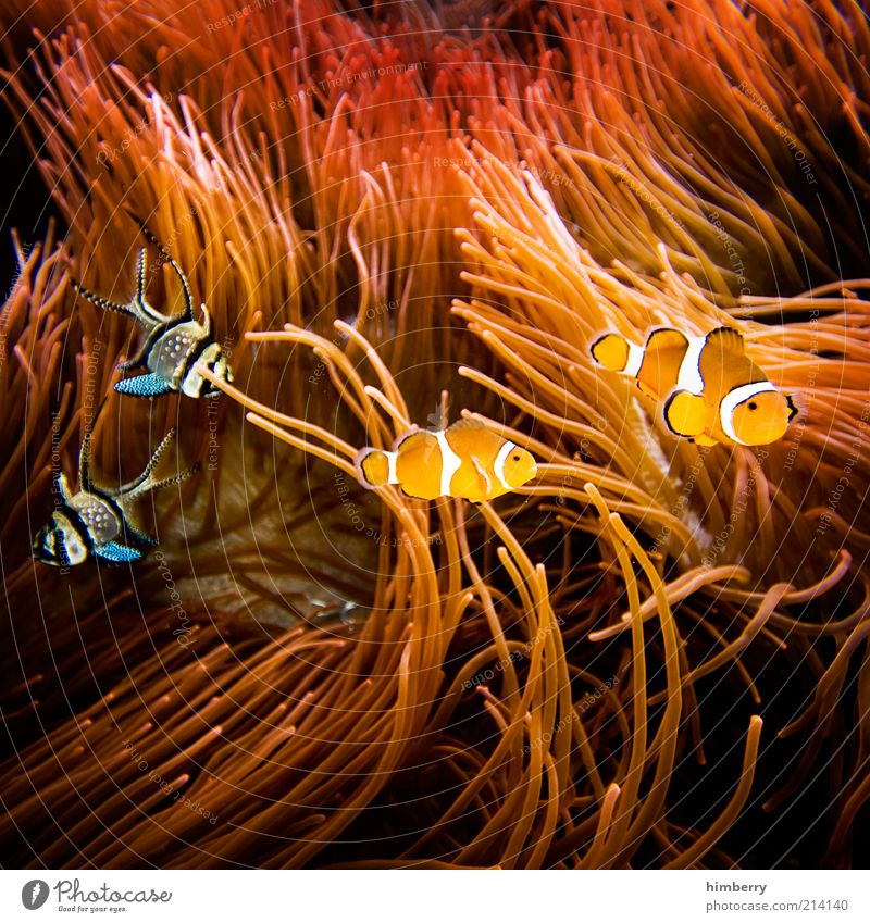Nature Animal Environment Happy Movement Style Friendship Together Fish Decoration Joie de vivre (Vitality) Relationship Pet Float in the water Underwater photo Fisheye
