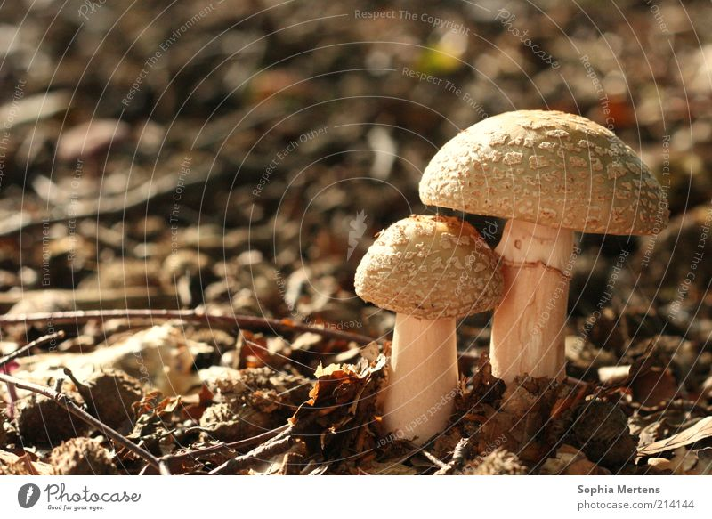 Nature Autumn Brown Earth Round Beautiful weather Woodground Mushroom cap Natural color