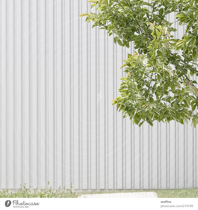 H 10.1] Günter Gras: Sheet metal without drum rolls Beautiful weather Tree Leaf Wall (barrier) Wall (building) Subdued colour Exterior shot Copy Space left