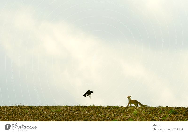 Sky Nature Animal Freedom Environment Landscape Movement Small Field Bird Earth Flying Wild Natural Wild animal