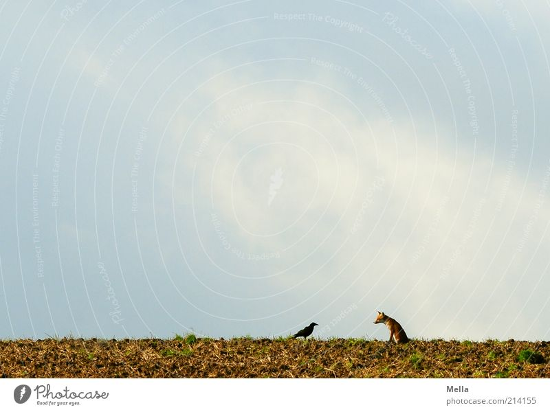 Nature Sky Animal To talk Freedom Landscape Together Bird Field Environment Earth Sit Communicate Natural Exceptional