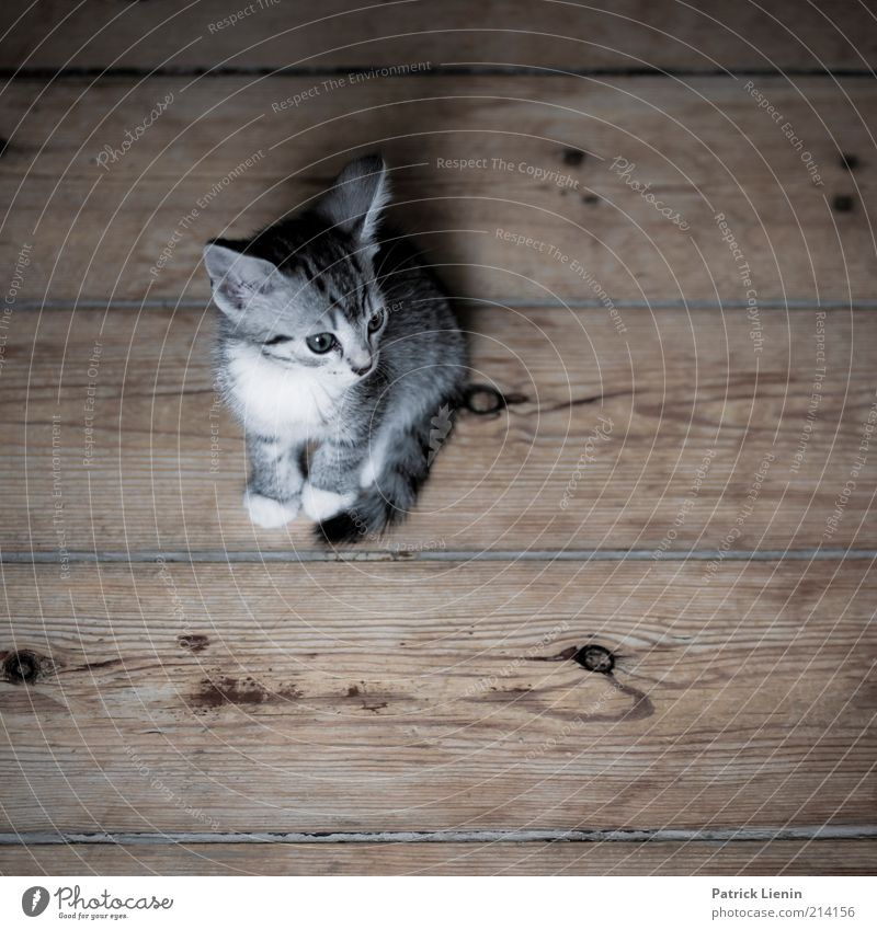 Cat Beautiful Joy Animal Small Happy Think Dream Moody Baby animal Contentment Wait Natural Exceptional Observe Friendliness