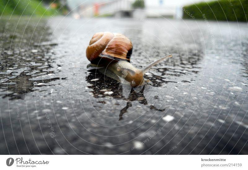 from 0 to 400 Environment Transport Street Animal Wild animal Snail Snail shell 1 Gray Feeler Crawl Crawler lane Wet Green Loneliness Fragile Defenseless Threat